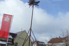 narrenbaum09